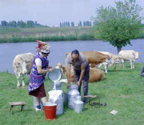 Mezőgazdaság - Tehenet fejnek a folyóparton