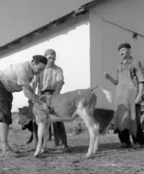 Foglalkozás - Állattenyésztés - Körúton egy állatorvossal