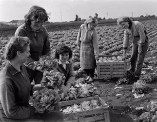 Mezőgazdaság - Növénytermesztés - Betakarítás Miskolcon