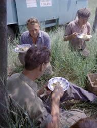 Mezőgazdaság - Életkép - Kombájnosok ebédszünetben