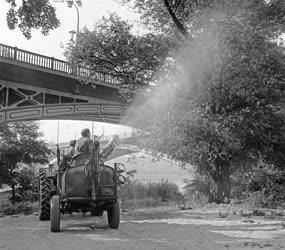 Egészségügy - Szúnyogirtás a Margitszigeten