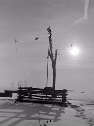 Életkép - Természet - Gémeskút galambokkal a havas Hortobágyon
