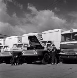 Export - Hűtőkocsikat gyárt az Ikarus gyár