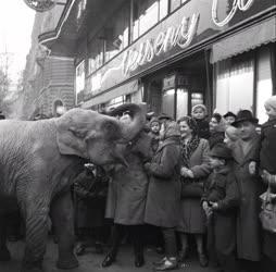 Színes - Jumbó elefánt a Verseny áruházban