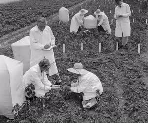 Mezőgazdaság - A Délalföldi Mezőgazdasági Kísérleti Intézet