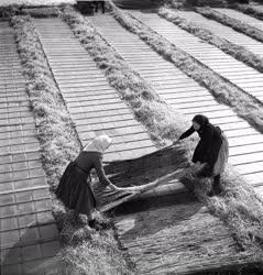 Mezőgazdaság - Melegágyak befedése a hideg ellen