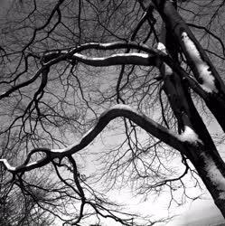 Színes - Tájak - Havas faágak