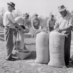 Mezőgazdaság - Őszi betakarítás Nagydorogon