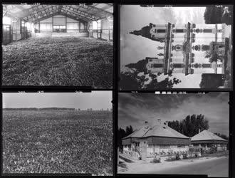 Mezőgazdaság - Hungarikum - Egyház - Paprika, főszékesegyház