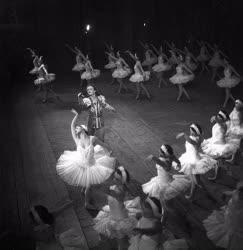 Kultúra - Tánc - Csajkovszkij: A hattyúk tava