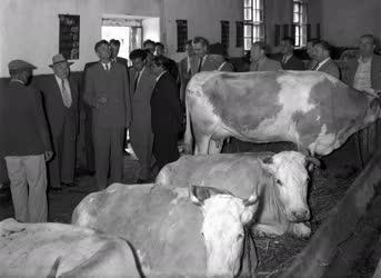 Mezőgazdaság - Szuszlov és Andropov Barcson