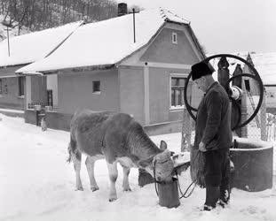 Életkép - Tél a Pilisben - Jánosi Gyula portája