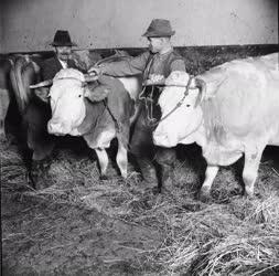 Mezőgazdaság - Állattartás - Termelőszövetkezeti igásállatok