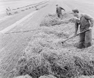 Mezőgazdaság - Lucernabetakarítás