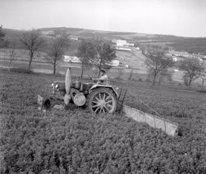 Gazdaság - Mezőgazdaság - Képek az alsópéli állami gazdas
