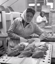 Állattenyésztés - Lúdtenyésztő és Hízlaló Termelőszövetkezeti Társulás