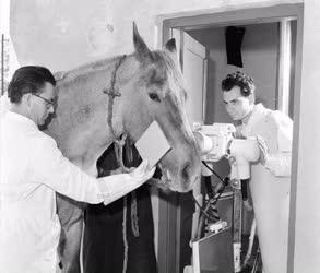 Állategészségügy - Az I. sz. Állatkórház új röntgen gépe