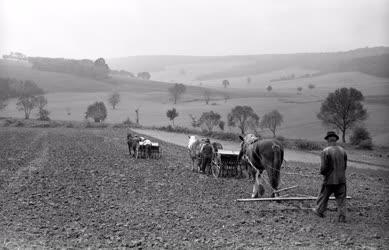 Mezőgazdaság - A zselickisfaludi Alkotmány Tsz