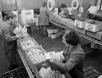 Élelmiszeripar - Déligyümölcs csomagolás