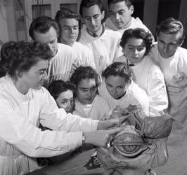Egészségügy - Orvostanhallgatók oktatása