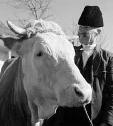 Mezőgazdaság - Kapospulai Ezüst Kalász Termelőszövetkezet