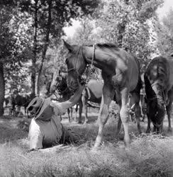 Vidéki élet - Állattenyésztés