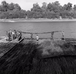 Környezetvédelem - Folyó - Pokrócozzák a Tiszát