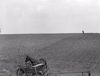Mezőgazdaság - Tavaszi munkák