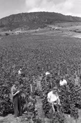 Mezőgazdaság - Nyárvégi munkák