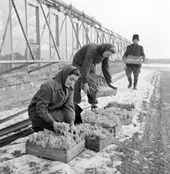 Mezőgazdaság - Soroksári tangazdaság