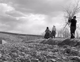 Mezőgazdaság - A döbröközi Zöldmező Tsz. háztáji gazdasága