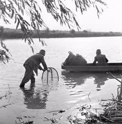 Halászat - Szegedi Kossuth Halászati Szövetkezet