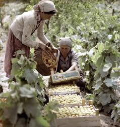 Növénytermesztés - Mezőgazdasági Termékeket Értékesítő Központ