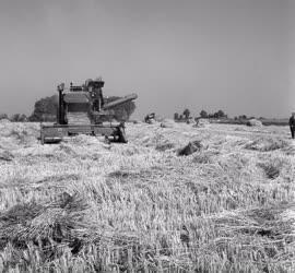 Mezőgazdaság - Gépesített rizsaratás Vizesfán