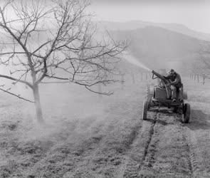 Mezőgazdaság - Permetezik a szendehelyi termelőszövetkezet almását
