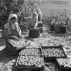 Mezőgazdaság - Hildpusztai Állami Gazdaság