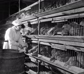 Élelmiszeripar - Budafoki Baromfifeldolgozó Vállalat
