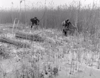 Mezőgazdaság - Nádvágók a tó jegén