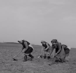 Mezőgazdaság - Vetik a kukoricát a Szabad Május Tsz-ben
