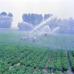 Mezőgazdaság - Öntözik a fűszerpaprikát