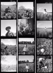 Mezőgazdaság - Agrimpex album