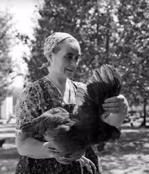 Mezőgazdaság - Állattartás - Baromfitenyészet