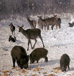 Természet - Tél a gemenci erdőben