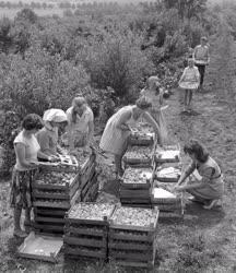 Növénytermesztés - Barack export