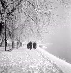 Természet-környezet - A szentendrei Duna-part télen