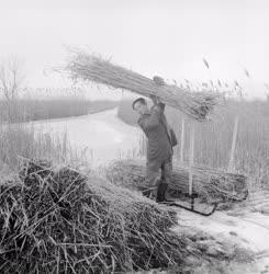 Foglalkozás - Életkép - Nádvágó a tó jegén
